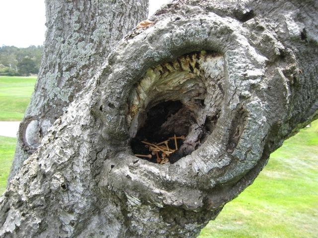PB 16 - Tree of Tees